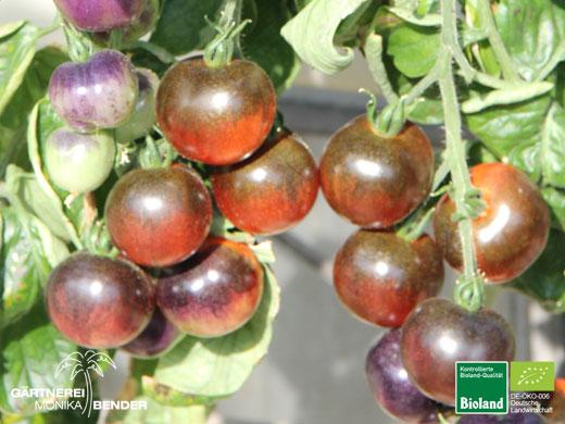 bioland tomaten pflanzen lycopersicon. Black Bedroom Furniture Sets. Home Design Ideas