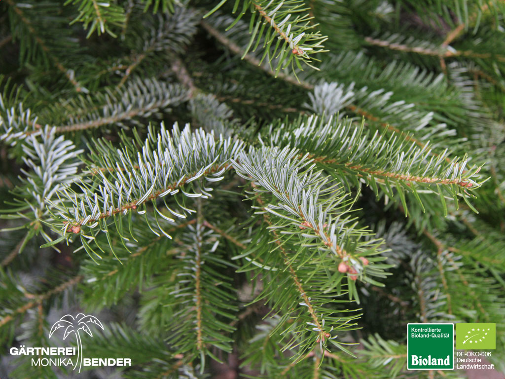 Bioland weihnachtsb ume in stuttgart for Weihnachtsbaum arten