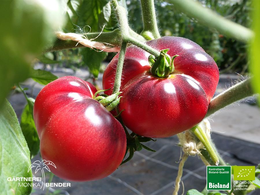 Tomaten Bioland Gärtnerei